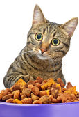 Cat eating dry cat food from metal bowl — Stock Photo