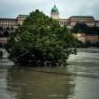 Flooded terrain in Europe — Stock Photo