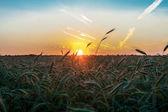 Bel paesaggio al tramonto — Foto Stock