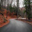 Road in the forest — Stock Photo #38677235