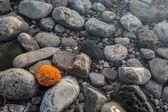 Sea polished rocks closeup — Stock Photo