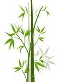 Bamboo background, vector — Stock Vector