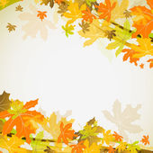 Maple autumn background, vector — Stock Vector