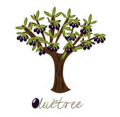 Olive tree — Stock Vector