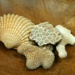 Corals and shell - Stock Photo
