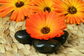 Orange marigold and pebbles — Stock Photo