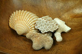 Corals and shell — Stock Photo