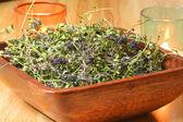 Thyme herb (Thymus serpyllum) — Stock Photo