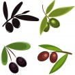 Olives - Stock Vector