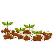 Young germinal plants — Stock Vector