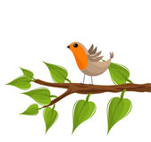 Robin bird on branch — Stock Vector