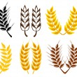 Wheat and rye ears — Vector de stock