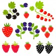Berry background — Stock Vector #26777879