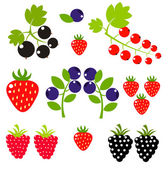 Berry background — Stock Vector