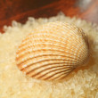 Seashell on salt pile — Stock Photo
