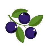 Blueberry — Stock Vector
