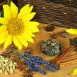 Spices and sunflower — Stock Photo