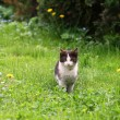 Black and white cat in garden — Stock Photo #29437095