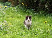 Black and white cat in garden — Stock Photo