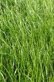 Grass texture — Stockfoto