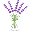 Lavender — Stock Vector #30447879