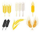 Wheat ears — Stock Vector
