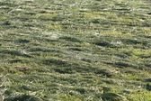 Hay on the field — Stock Photo