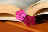 Flower bookmark — Stock Photo