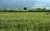 сельское хозяйство в польше — Стоковое фото