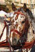 Paard in vervoer — Stockfoto
