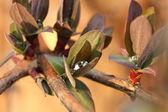 Kropla wody w liście — Zdjęcie stockowe