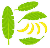 Banana leaves — Stock Vector