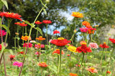 Fleurs dans le jardin — Photo