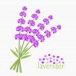 Lavender flowers bouquet — Stock Vector #36346523