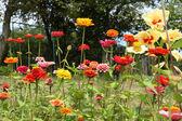 Flowers in garden — Stock Photo