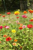 Jardim de flores — Foto Stock