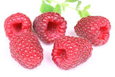Raspberry over white — Stock Photo