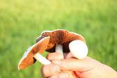 字段的蘑菇 — 图库照片