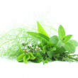 fresh herbs — Stock Photo #38344929
