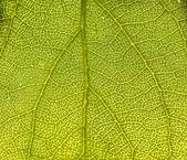Leaf macro — Stock Photo