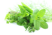 Green herbs — Stock Photo