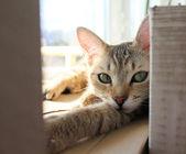 Kočka relaxovat — Stock fotografie