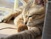 Cat sleep — Stock Photo
