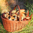 Mushrooms in basket — Stock Photo #49948441