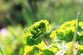 Sun lighted leaves — Stock Photo