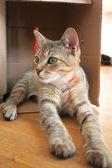 Cat in box — Stock Photo