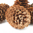 Royalty-Free Stock Photo: Fir-cones I