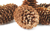 Fir-cones I — Stock Photo