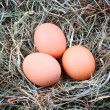 Photo: Three chicken eggs in straw