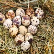 Quail dappled egg in straw, close-up — Stockfoto #33581479